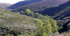 Vale do rio Onor